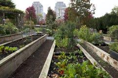 Gemüsegarten der Stadt Stockfoto