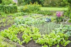 Gemüsegarten-Flecken Stockfoto