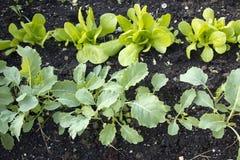 Gemüsegarten mit Jungpflanzen Lizenzfreie Stockfotos