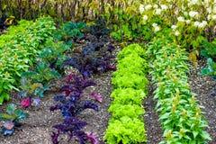 Gemüsegarten mit Kopfsalat und Kohl lizenzfreies stockfoto