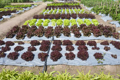 Gemüsegarten, mit Plastik Lizenzfreie Stockfotos