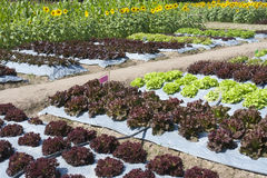 Gemüsegarten, mit Plastik Stockfoto