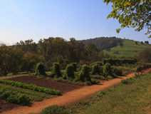 Gemüsegarten Monticello Stockbild