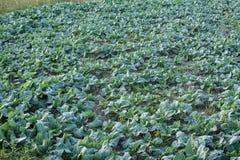 Gemüsegarten in Pua, Thailand Stockfoto