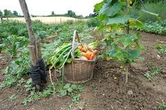 Gemüsegarten sechs Stockbilder