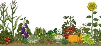 Gemüsegartenbett Lizenzfreies Stockfoto