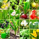 Gemüsegartensammlung Lizenzfreie Stockbilder
