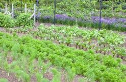 Gemüsegemeinschaftszuteilung im englischen ländlichen Dorf Lizenzfreie Stockfotografie