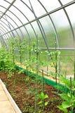 Gemüsegewächshäuser Stockbilder
