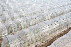 Gemüsegewächshaus Lizenzfreie Stockfotos