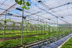 Gemüsehalle Lizenzfreie Stockbilder