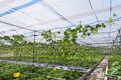 Gemüsehalle Stockbilder