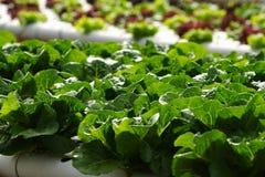 Gemüsehydroponik Lizenzfreies Stockbild