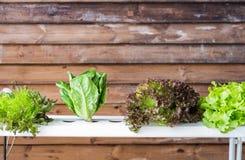 Gemüsehydroponikmethode des Wachsens von Anlagen ist Landwirtschaftstechnologiegebrauch Düngemittel und wate Stockfotografie