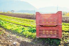 Gemüsekasten auf Landwirtschaftsfeld lizenzfreie stockfotos
