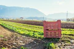 Gemüsekasten auf Landwirtschaftsfeld lizenzfreie stockbilder