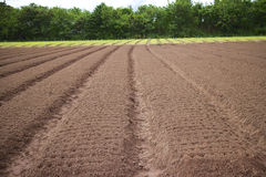 Gemüselandwirtschaft. Stockfotografie