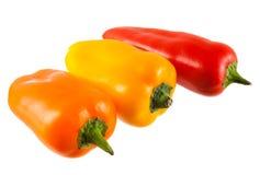 Gemüsepaprika Stockbild