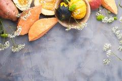 Gemüsepaprika gelb und rot, Kartoffeln und Kürbis auf einem grauen Hintergrund Die Ernte ist herbstlich Freier Raum für Text, Rah stockbilder
