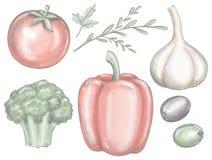 Gemüsesatz mit grünem Pfeffer, Knoblauch, Brokkoli, Oliven, Grüns und Tomate vektor abbildung
