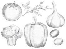 Gemüsesatz mit grünem Pfeffer, Knoblauch, Brokkoli, Oliven, Grüns und Tomate stock abbildung