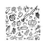 Gemüseskizzenrahmen für Ihr Design Stockfoto
