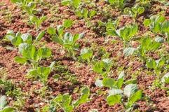 Gemüsetopf Stockfotos