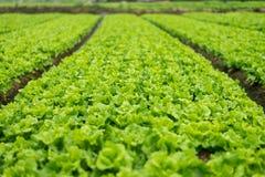 Gemüseumwandlung von Landwirten im Porzellan stockfotos