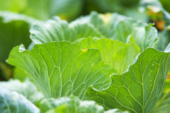 Gemüseurlaub Lizenzfreie Stockbilder