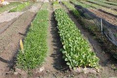 Gemüsezucht lizenzfreie stockbilder