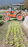 Gemüsezucht stockfotos
