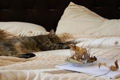 Gemütliche Innenherbststimmung, Schlafenkatze im bequemen Bett, Arbeitsbuch und Kaffeetasse mit Herbstlaub stockfotos