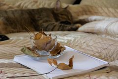 Gemütliche Innenherbststimmung, Schlafenkatze im bequemen Bett, Arbeitsbuch und Kaffeetasse mit Herbstlaub lizenzfreies stockbild