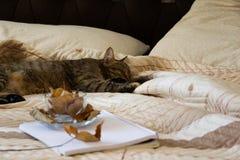 Gemütliche Innenherbststimmung, Schlafenkatze im bequemen Bett, Arbeitsbuch und Kaffeetasse mit Herbstlaub stockbilder