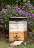 Gemütlicher alter bunter Bienenstock in den Garten und Aster Amellus-Blumen Stockfotografie