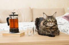 Gemütliches Haus Auf dem Tisch ein Kessel und eine nahe gelegene Katze Stockfotos
