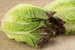 Gem Lettuce rosso Immagini Stock Libere da Diritti