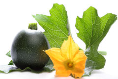 Gem squash. With leaf and flower isolated on white background Stock Photography