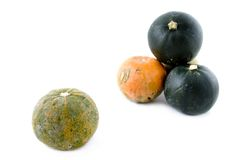 Gem-squashes Stock Images