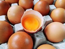Gema amarela, ovo nas cascas de ovo, cozinheiro delicioso imagem de stock royalty free