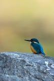 A gema azul Fotografia de Stock