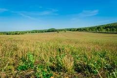 Gemaaid gras op een wild gebied Royalty-vrije Stock Foto's