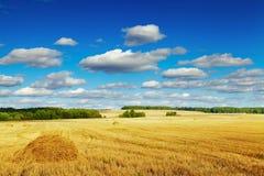 Gemaaide cornfield Royalty-vrije Stock Afbeelding
