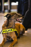 Gemakkelijke leven van de politiehond het niet Stock Foto