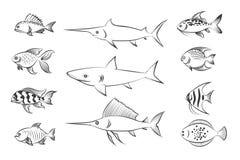 gemalte fische stockfotos  u2013 149 gemalte fische stockbilder