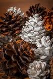 Gemalte Kiefern-Kegel Stockbild