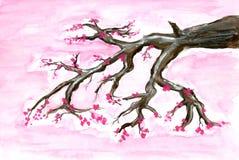 Gemalte Kirschblüte Stockfotografie
