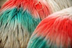 Gemalte Schaf-Wolle Stockfotos