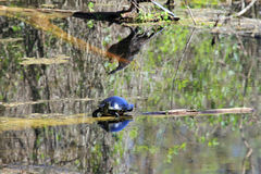Gemalte Schildkröte stockfotografie