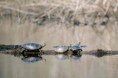 Gemalte Schildkröten Lizenzfreie Stockfotos